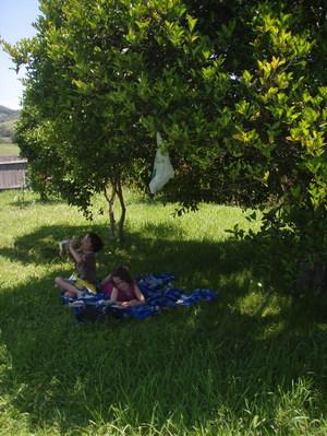 under a shaded tree