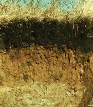 Soils Enriched With Calcium to Trap Carbon Gas