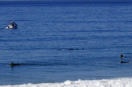 Dolphins @ Palm Beach