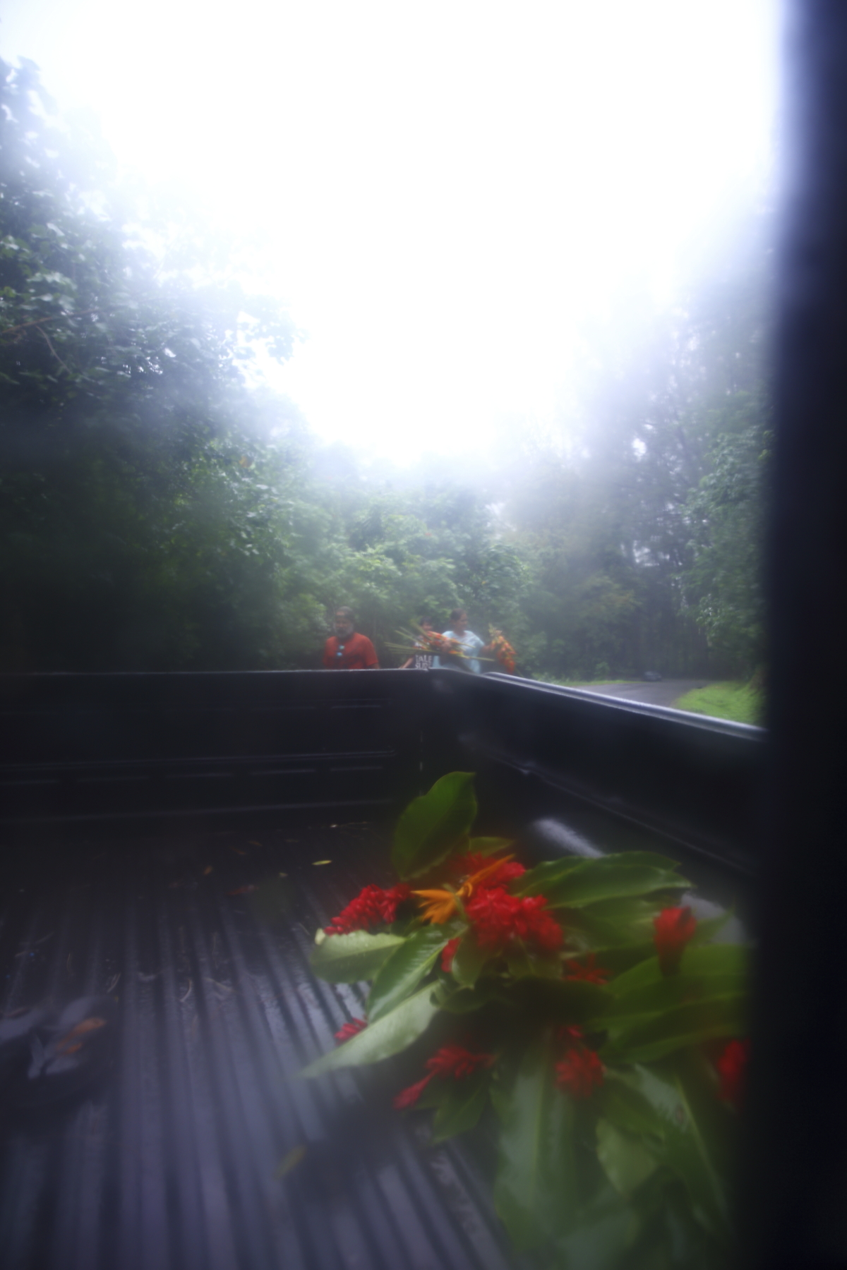 Trip into the rain forest to collect flowers