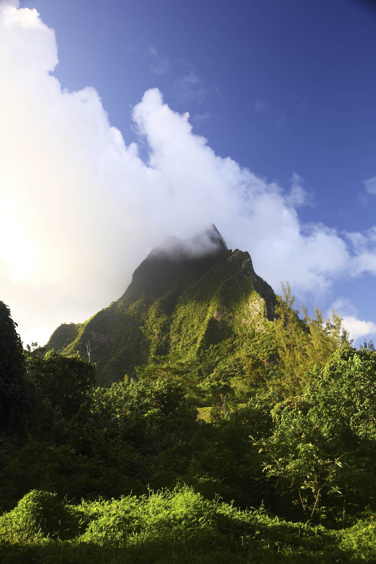 Up in the mountains of Moorea, Tahiti
