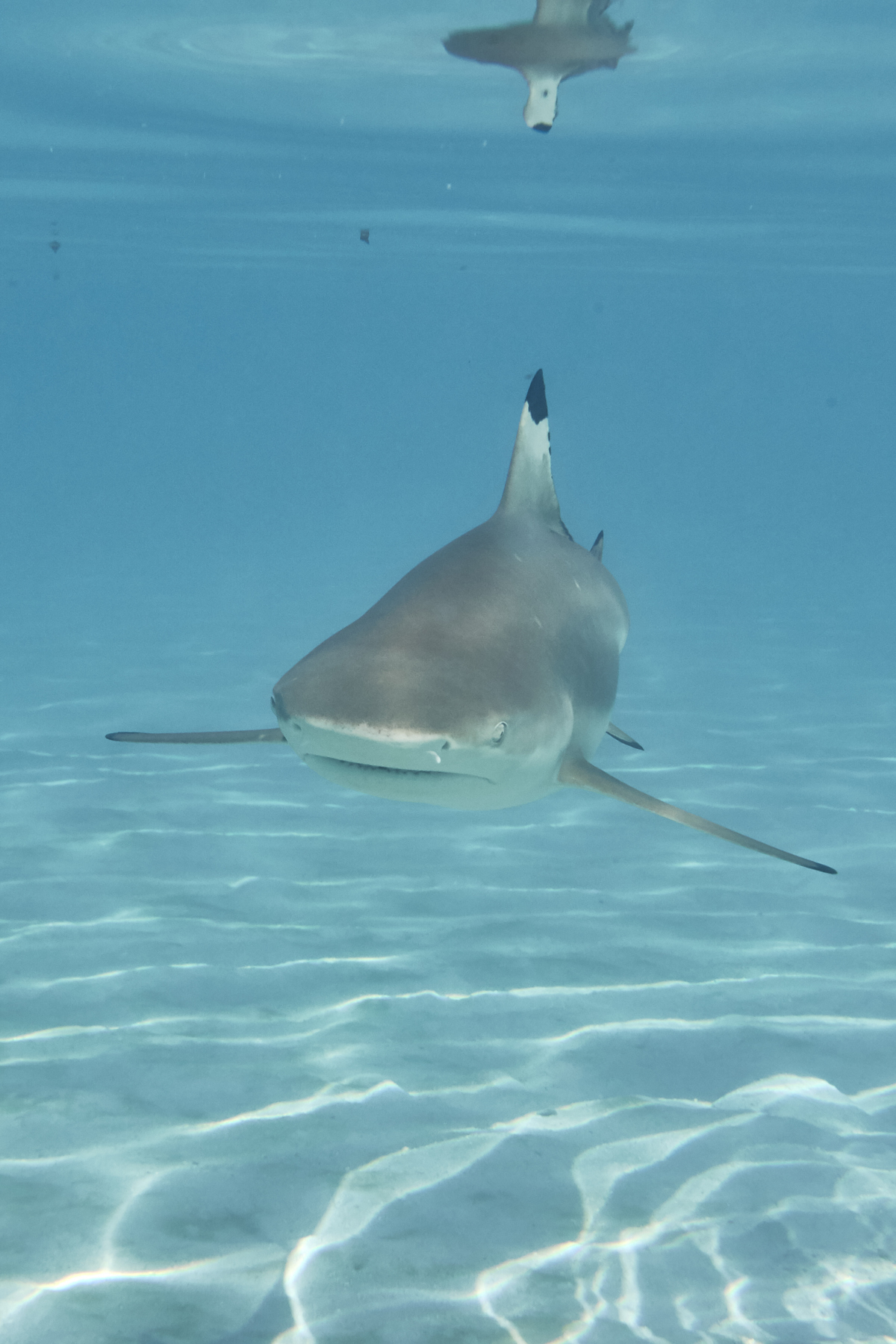 Another day in Paradise another day swimming with rays and sharks