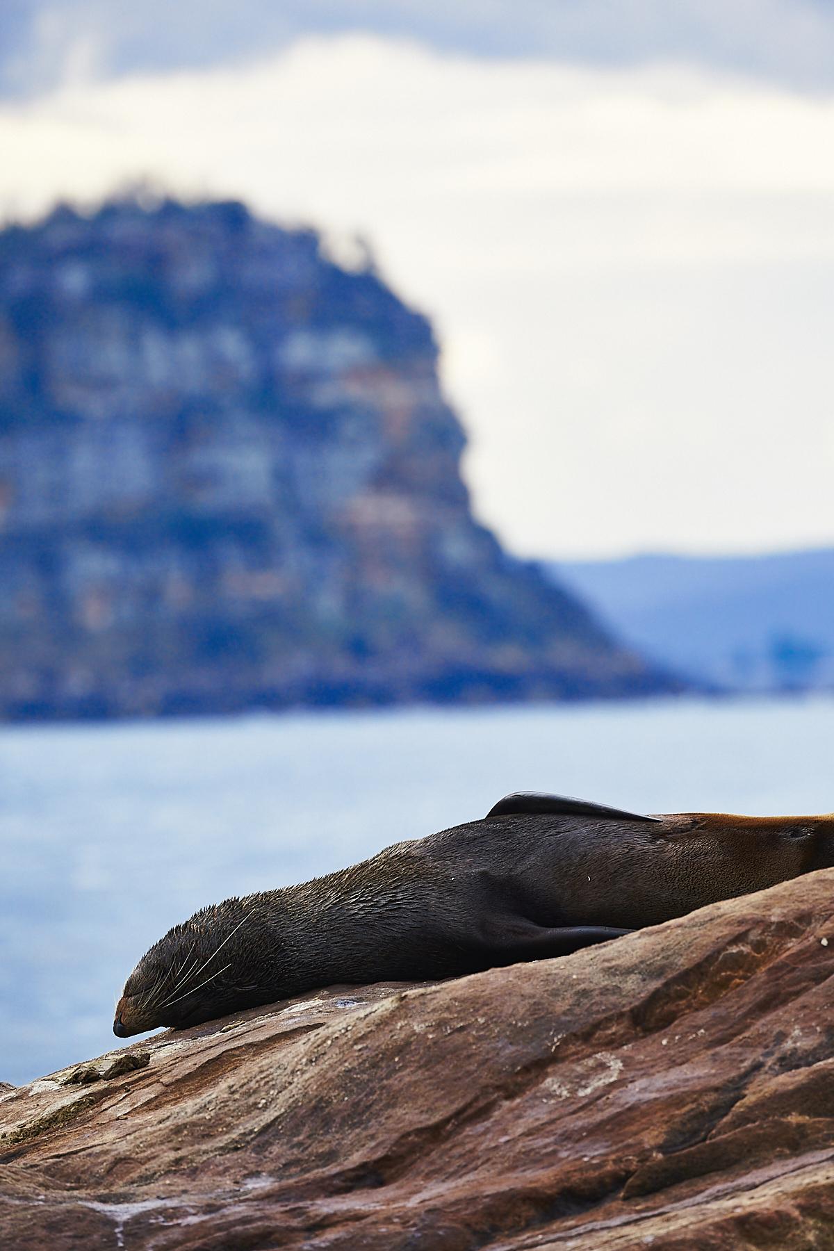 Meet the Seals from Palm Beach